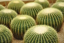 Free Spiky Cactus Royalty Free Stock Images - 15361749