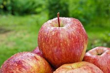 Free Apples In The Garden Royalty Free Stock Photos - 15361858