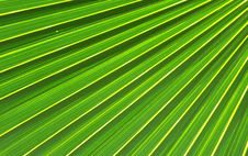 Free Palm Leaf Royalty Free Stock Image - 15362066