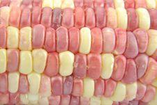 Free Corn Royalty Free Stock Photo - 15363305