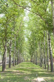 Free Nicely Decorated Rows Of Trees Stock Photography - 15363932
