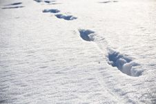 Animal Footprints On Snow At Winter Royalty Free Stock Image
