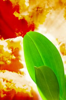 Free Bright Green Leaves In  Colorful Sky Royalty Free Stock Photography - 15365587