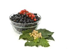 Free Still Life Of Colored Currants. Royalty Free Stock Photos - 15366848