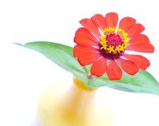 Free Flower Stock Photos - 15367233
