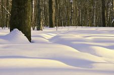 Free Winter Forest Royalty Free Stock Images - 15368149