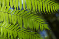 Free Fern Leaves Royalty Free Stock Photo - 15378895