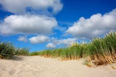 Free Sand Dune With Grass Stock Image - 15370301