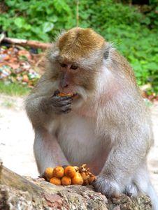 Free Monkey Stock Photo - 15372310