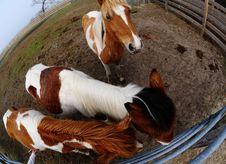 Free Horses Royalty Free Stock Image - 15373826