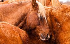 Free Horses Royalty Free Stock Photos - 15373838
