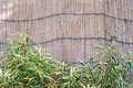 Free Bamboo Fence Stock Photography - 15389382