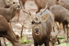 Free Young Deer Stock Photography - 15380872