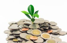 Free Little Plant Growing From Pile Of Coins Stock Image - 15382161