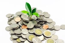 Free Little Plant Growing From Pile Of Coins Royalty Free Stock Photo - 15382625