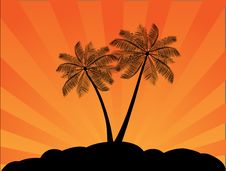 Free Tropical Palms Stock Images - 15382864