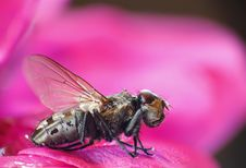 Free Macro Image Of Fly Stock Photos - 15383843