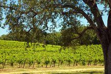 Free Shenandoah Valley Vineyards Stock Photo - 15386500