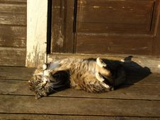 Free Cat Lying On Doorstep Stock Images - 15386864
