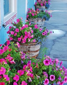 Free Planters Of Petunias Royalty Free Stock Photo - 15387415