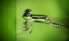 Free A Closed Up On Dragonfly Royalty Free Stock Photography - 15388107