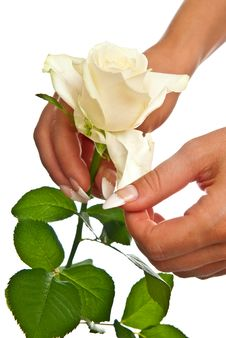 Free Rose In Female Hands Royalty Free Stock Image - 15389216