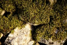 Free Moss Royalty Free Stock Photos - 15389318