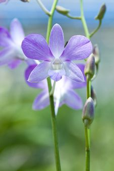 Free Beautiful Orchid Flower Stock Images - 15389384