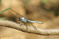 Free Blue Dragonfly Stock Photo - 15390630