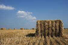 Field After Harvest. Royalty Free Stock Image