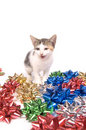 Free Cat And Christmas Bows Stock Photos - 1545423