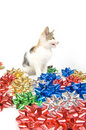 Free Cat And Christmas Bows Stock Image - 1545431