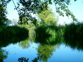 Free Green Reflect Royalty Free Stock Photography - 1546967