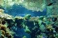 Free Aquarium Stock Photo - 1548840