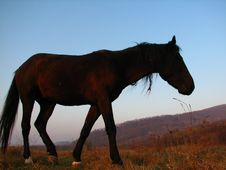Dark Brown Horse Silhouette. Stock Image