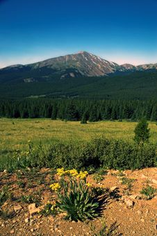 Free Mountain Pastures With Flowers Stock Photography - 1543922