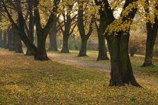Free Autumn, Fall, Park Royalty Free Stock Image - 1544926