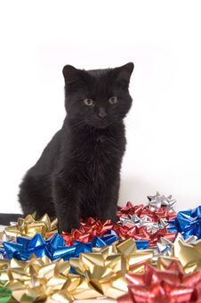 Black Cat And Christmas Bows Stock Image