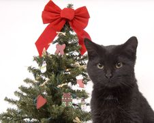 Free Black Cat With Christmas Tree In Background Stock Photos - 1545393