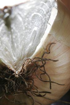 Free Sliced Onion Stock Photo - 1545860
