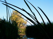 Sedge Over Blue Sky Stock Photography
