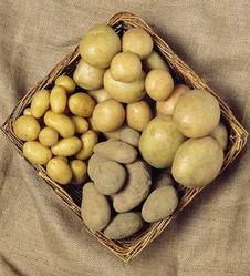 Free Potatoes Royalty Free Stock Photos - 1547448