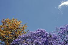 Free Tree Background Stock Image - 1549511