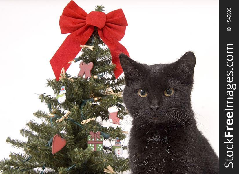 Black cat with Christmas tree in background
