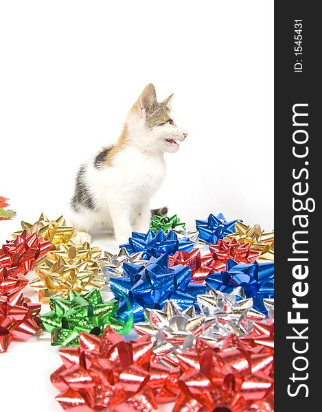 Cat and Christmas bows