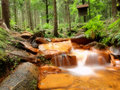 Free Forest Stream Royalty Free Stock Photos - 15407208