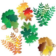 Free Motley Leaves Of Different Trees Royalty Free Stock Photo - 15402075