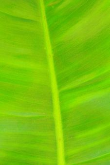 Free Leaf Of A Plant Royalty Free Stock Images - 15403019