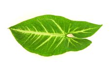 Free Leaf Of A Plant Stock Image - 15403041