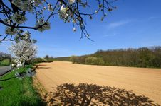 View Of Plowed Field With Blooming Apple Trees